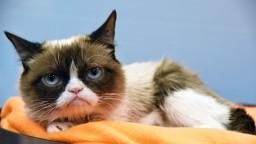 Zomrela mrzutá Grumpy Cat, najznámejšia mačka na svete
