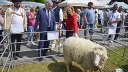 Ovčieho mlieka je najviac od vstupu do EÚ, Matečná chválila bryndzu