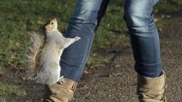 Hasiči, polícia a veterinári zasahovali kvôli zaseknutej veveričke