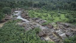 Ničenie brazílskeho pralesa sa za Bolsonara dramaticky zrýchlilo