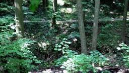 Tri dni ležal v lese, lekár ho vyhlásil za mŕtveho. Muž prežil