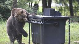 Stará Ľubovňa varovala turistov, v lesoch sa pohybuje medveď