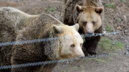 Na Záhorí pribúdajú medvede, polícia varuje pred celou rodinkou