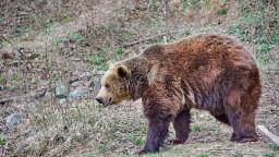 Česi v Tatrách potrebovali pomoc záchranárov, stretli medveďa