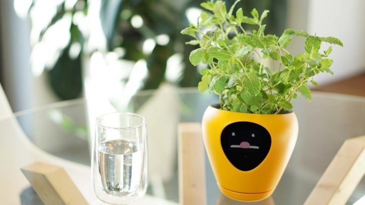 Kvetináč s animovanou tvárou naznačí, že treba poliať rastlinu