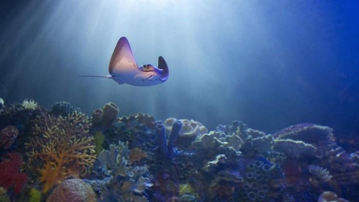 Unikátny nález. Výskumníci objavili v Mexiku nové koralové útesy