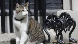 Kocúr prežil nejedného premiéra. Na Downing Street zostáva