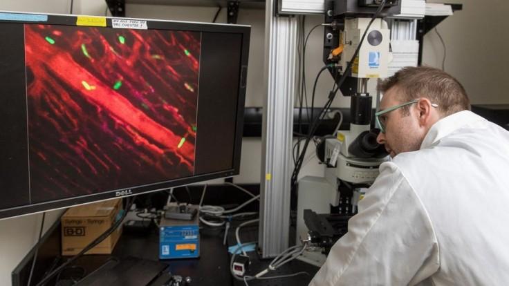Novoobjavené bunky pomáhajú liečiť zjazvené srdcia