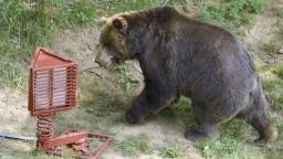 Medveď v Tatrách je premnožený, MŽP to nevidí dramaticky