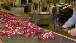 Bitúnok bol ochotný kupovať choré kravy na liekoch. Skončil
