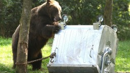 Medvede už prichádzajú aj do mesta, primátor žiada o pomoc