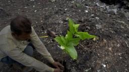 Milióny stromov vysadili za jeden deň, chcú obnoviť svoju krajinu