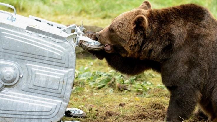 Medveď preskočil plot a roztrhal ovcu. Buďte ostražití, varuje obec