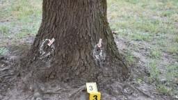 Stromy na juhu SR záhadne vysychajú, niekto ich má na svedomí
