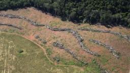 Dažďový prales mizne, alarmujú vedci. Odlesňovanie sa zrýchlilo