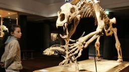 Zistili, prečo vyhynul postrach praľudí, medveď jaskynný
