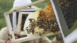 Spolok včelárov oslavuje storočnicu, zišli sa v skanzene