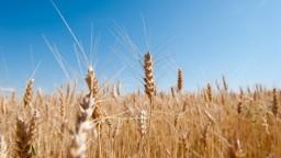 Poľnohospodári bilancujú, ich očakávania narušili vrtochy počasia
