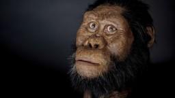 Evolúcia bola oveľa zložitejšia, ukazuje milióny rokov stará lebka