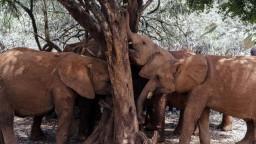 Koniec divých zvierat v cirkusoch. Dáni sa chystajú vykúpiť slony