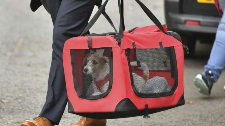 Johnsonova domácnosť sa rozrástla, zachránil psíka Dilyna
