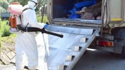 Africký mor ošípaných naďalej zúri, potvrdených prípadov je už 23