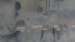 Mäso a požiare spolu úzko súvisia. Čo pomôže Amazónii?