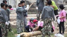Desiatky tigrov, ktoré zachránili z budhistického kláštora, uhynuli