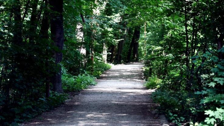Lesy pri Bratislave budú ako prvé u nás zónou bez pesticídov