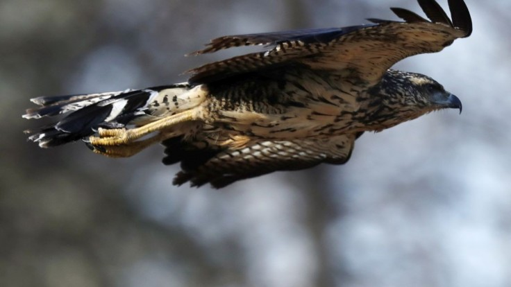 Kde zmizli miliardy vtákov? Vedci sú po výskume prekvapení