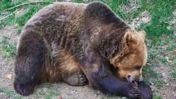 Na sídlisku sa potuluje medveď. Dajte si pozor, varovali ľudí