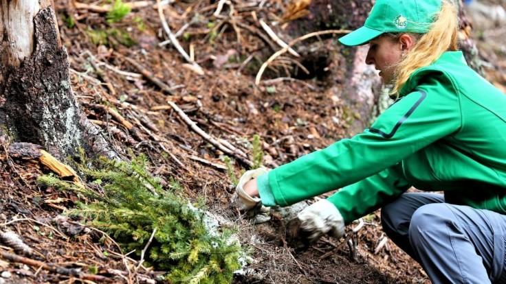 V Tatrách idú sadiť stromy vo veľkom, pridať sa môže každý