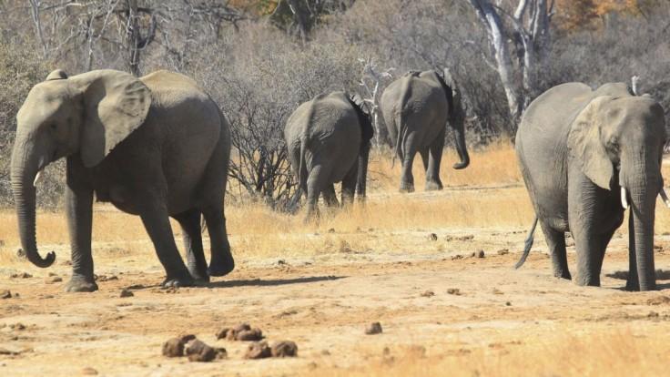 Situácia je vážna. V národnom parku uhynulo viac ako 50 slonov