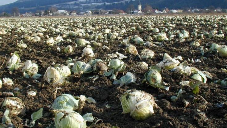 Na poliach ležia tony zeleniny, obchody vraj kupujú zahraničnú
