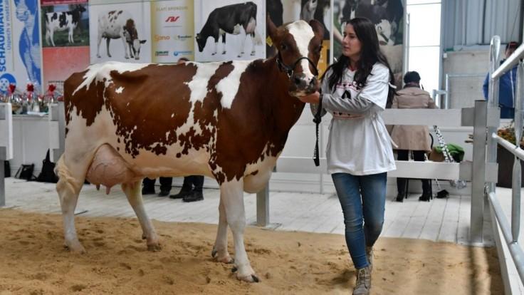 PPA už vypláca preddavky na priame podpory pre chovateľov