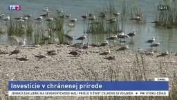 Ochranári otvorili vyhliadkové veže na pozorovanie vzácnych vtákov