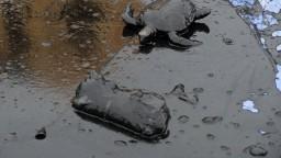 Pobrežie znečistila ropná škvrna. Hrozí, že zasiahne koralový útes