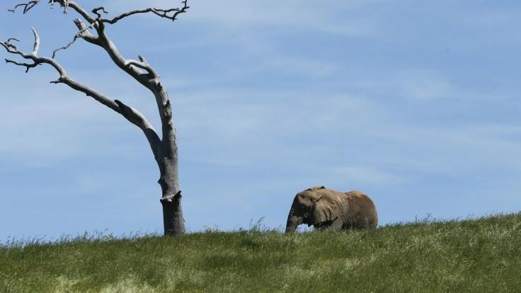 Vyhynutie hrozí až tretine rastlín v tropických krajinách