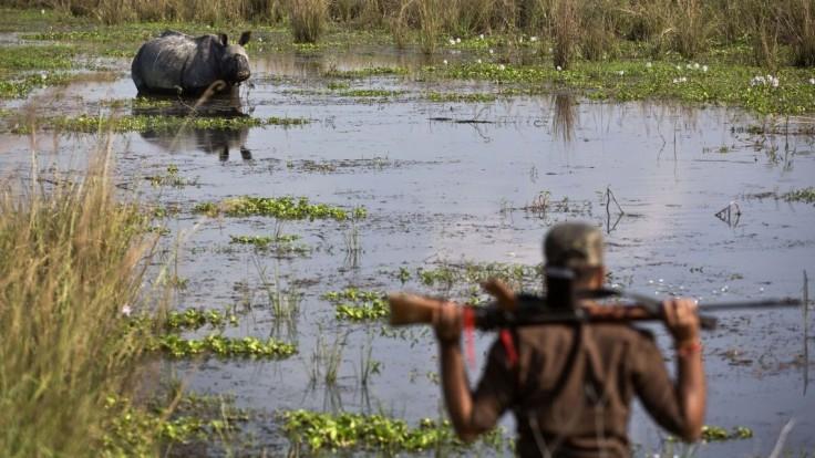 Je ich čoraz menej. Posledný nosorožec v tejto krajine zahynul