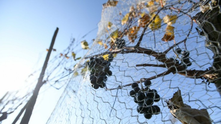 Súd tvrdo potrestal tokajského vinára, vymeral mu dlhoročný trest