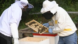 Včelárov postihol mor, dostali dvojnásobnú podporu na opeľovanie