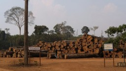 Amazonský prales mizne rýchlejšie, ukázali to zábery z vesmíru