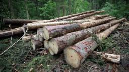 Novela upravuje ťažbu dreva v národných parkoch. Je nezákonná