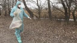 Na Slovensko sa dostala vtáčia chrípka, potvrdili to testy