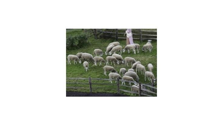 Stavy oviec v SR sú stabilizované, mohli by byť štvornásobne vyššie