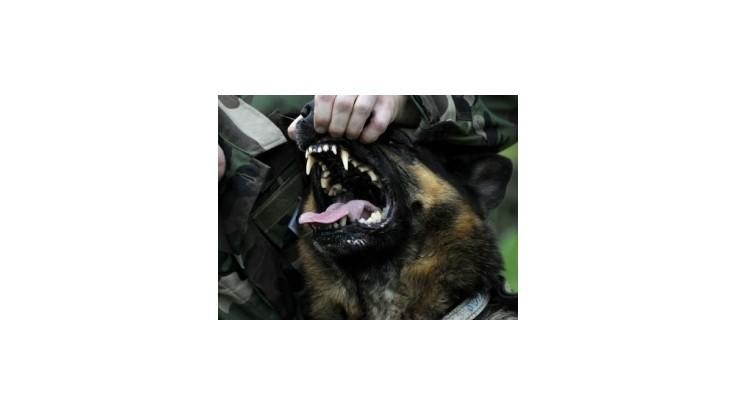 V Košiciach opäť zaútočili psy, jedného polícia zastrelila