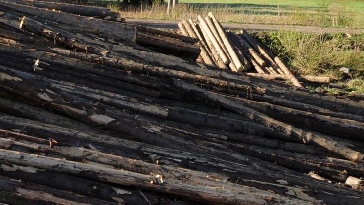 Lesy SR vypovedali viac ako 100 zmlúv, ide o odber dreva