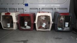 Cestovanie so psom je možné aj počas pandémie, je však rizikové