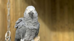 Zoo zistila, že má problematických papagájov. Radi nadávajú