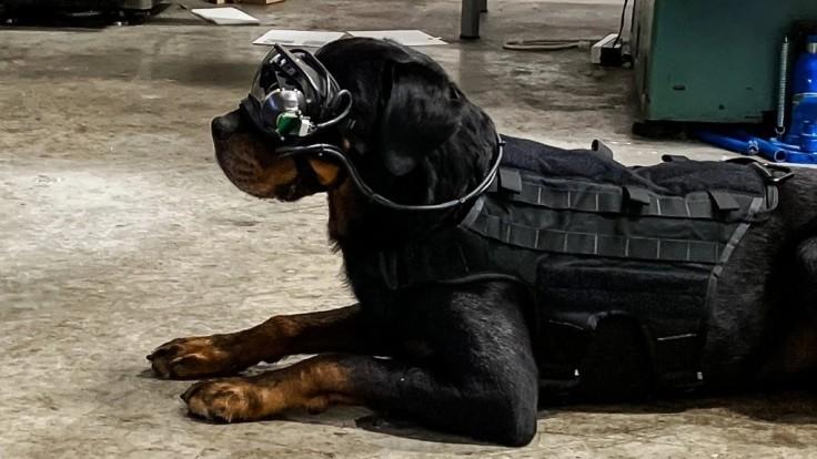 Americká armáda pracuje na AR okuliaroch pre vojenské psy